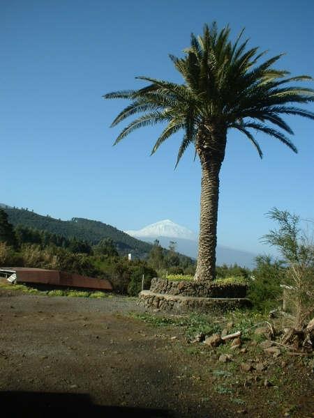 Finca con 3 casas y cuadras en El Sauzal.