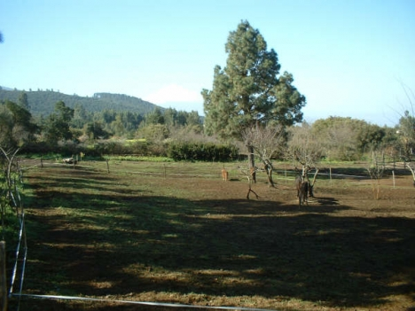 Pferdefinca mit 3 Häusern in El Sauzal.