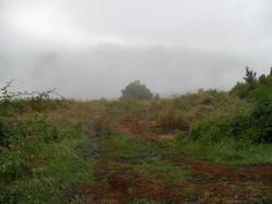 Finca in Aguamansa