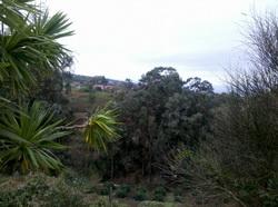 kleine Farm 1.300 mt tacoronte