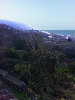 Tenerife, финка (усадьба) / Finca в Los Realejos