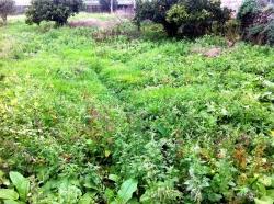 Красивая усадьба с загородный дом