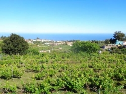 Finca: Weinbau in vollem Betrieb und Haus!