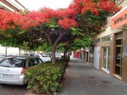 Teneriffa, Geschäftslokal in Puerto de la Cruz, Gelegenheit!! Geschäftslokal im Zentrum. Anhöhe / Büro, Keller, im Ausfallstrasse.