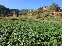 Tenerife, Finca in Tegueste, Opportunity! Large rustic land with farmers shed,and water and electricity conection!