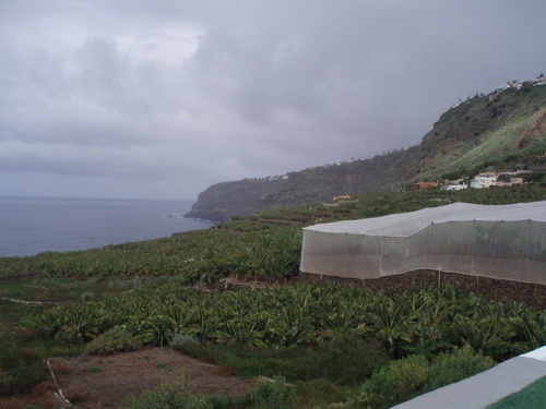 Large banana finca with 5 houses.