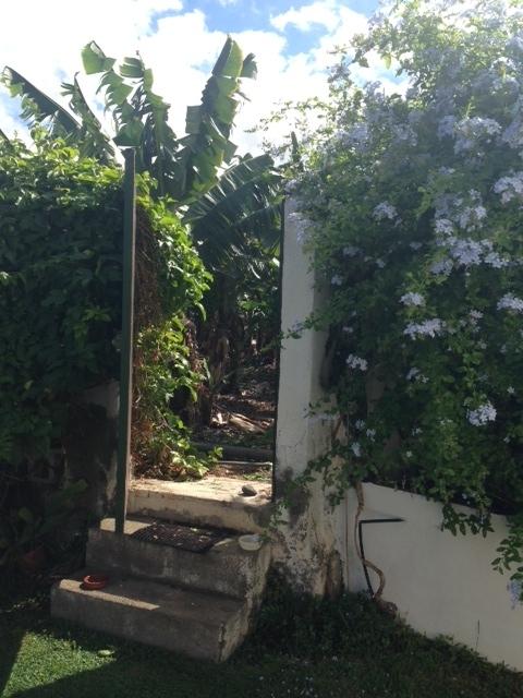 Einmaliges Appartement gelegen innerhalb den Banane Plantagen.